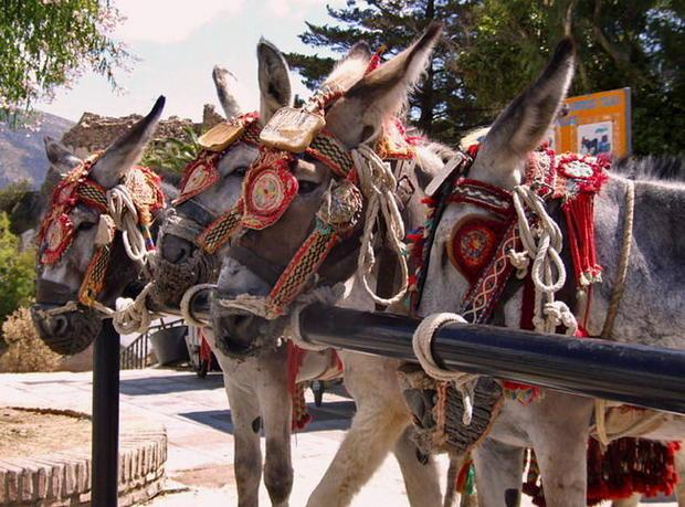 donkey-taxis4_1